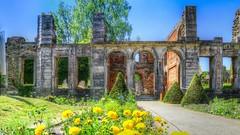 Abbaye de Villers-La-Ville(2) (YᗩSᗰIᘉᗴ HᗴᘉS +6 000 000 thx❀) Tags: abbaye villerslaville belgium belgique old architecture ruin ruine flower blue yellow hensyasmine bâtiment