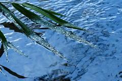 P2530019f (haberwolf) Tags: wasser water wassertropfen reflection