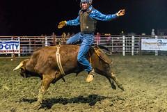 DSC_4569-Edit (alan.forshee) Tags: rodeo horse cow ride fall buck spin twirl bull stallion boy girl barrel rope lariat mud dirt hat sombrero