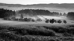 Morning (I.Dostál) Tags: morning landscape meadow tree fog sky hill country side
