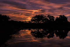 Reflection Is An Essential Part Of Learning (J Swanstrom (Never enough time...)) Tags: sunset clouds cloudscape reflection water lake pond tree silhouette evening sky orange pink yellow ripple shore jswanstromphotography nikon d750 savannah live oak