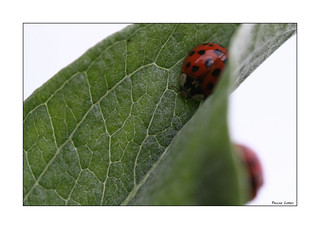 Ladybug Hide And Seek