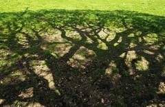 Eiche auf der Kuh-Weide; Bergenhusen, Stapelholm (91) (Chironius) Tags: stapelholm bergenhusen schleswigholstein deutschland germany allemagne alemania germania германия niemcy rosids fabids buchenartige fagales buchengewächse fagaceae eiche quercus stieleiche baum bäume tree trees arbre дерево árbol arbres деревья árboles albero oak chêne дуб roble quercia rovere ek carvalho meşe eik árvore ağaç boom träd deutscheeiche quercusrobur schatten