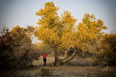 Xinjiang Landscape 2