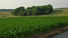 Skupina stromů (Michael Kůr) Tags: českárepublika czechrepublic jižnímorava southmoravia dolníbojanovice pole field krajina landscape countryside