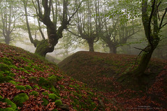 La magia de Itxina (Pruden Barquin) Tags: paisaje landscape largaexposicion longexposure bosques forest niebla fog hayas hayedos ambiente prudenbarquin fotografia naturaleza nature