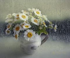 Through A Rainy Window (Jean Turner Cain) Tags: flower flora floral flowers fleur bloem blomst texture textured textures jeanturnercain photoshop adobe