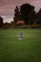 Don't go (James Cosgrove2013) Tags: nature squirel park gardens animal wild wildlife
