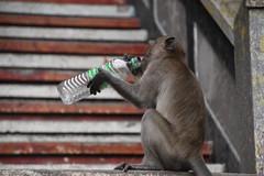 Macaque at Batu Cave, Kuala Lumpur (Manoo Mistry) Tags: nikon tamron tamron18270mmzoomlens nikond5500bodyonly kualalumpur malaysia tourism tourist macaques bottles waterbottle monkey batucaves steps