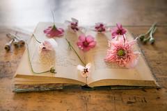 21/52 Libros (Nathalie Le Bris) Tags: backlight contraluz contrejour fleur flor flower livre stilllife amapola poppy coquelicot