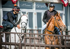 Anthony Dutrow Trainees (EASY GOER) Tags: horse racing sports equine thoroughbreds canon5dmarkiii belmontpark races racetrack thoroughbred newyorkhorseracing sportofkings canon 5d mark iii track horseracing horses ny athletes newyorkstate 5dmarkiii