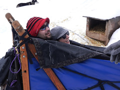 Safely tucked in the sled (lmundy2002) Tags: dogs dogsled dogsledding huskies sleds whitefish olney whitefishmt olneymt montana mt winter wintersports