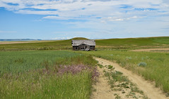 Homestead Memories (cutthroatsrule) Tags: montana prairie homestead house decay grassland mountains crazy mts