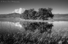Loch Awe (.Brian Kerr Photography.) Tags: scotland scottish scottishlandscapes visitscotland scottishhighlands scotspirit landscapephotography sony a7rii fe2470mmf28gm briankerrphotography briankerrphoto photography monochrome availablelight grasses trees outdoor outdoorphotography nature naturallandscape natural blackandwhite highlands assynt lochawe landscape