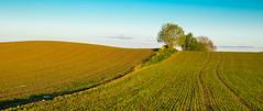 The tree in the middle (harald.bohn) Tags: jorde åker åkre nysådd eng field green grønn grønt tre tree meadow