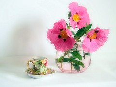 Rock Rose (Smiffy'37) Tags: stilllife rockrose objects flowers colourful softfocus