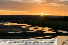 _DSC4972 copy (naturephotographywildlife) Tags: kruger wildlife scenery animals birdlife a99ii africa park
