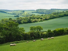 The-Chilterrns-towards-Studley-Green (WhereAngellsTread) Tags: whereangellstread chilterns studley spring