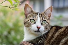 Marlifa (Mystycat =^..^=) Tags: chat cat katze kitty gato gatto animal félin feline coth5