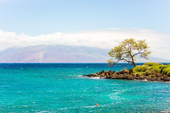 Because of You (Thomas Hawk) Tags: hawaii maui wailea tree fav10 fav25