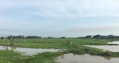Myanmar, Yangon Region, Southern District, Twantay Township, Let Pan Gwa Village Tract (Die Welt, wie ich sie vorfand) Tags: myanmar burma bicycle cycling yangonregion yangon rangoon southerndistrict surly steamroller twantaytownship twantay letpangwa