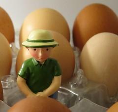2108 Gardener Guy in the egg field (Andy - Busyyyyyyyyy) Tags: battery bbb eee eggs fff freerange gardener ggg green guy male man mmm model toy ttt