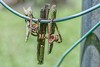 Rust isn't the Only Issue Here (Maggggie) Tags: takeaim rust rusty brown red orange clothesline clothespins broken wooden old useless