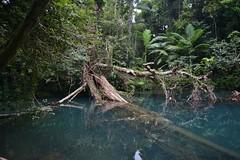 The Blue Hole (shaneblackfnq) Tags: blue hole daintree national park swimming pool water creek cooper shaneblack fnq far north queensland australia tropics tropical kaba gada