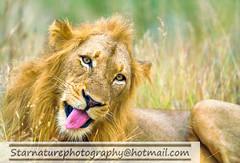 _DJA3325 copy (naturephotographywildlife) Tags: kruger wildlife scenery animals birdlife a99ii africa park