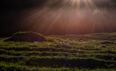 (raimundl79) Tags: wow landschaft landscape lightroom ländle lichtspiel photographie österreich fotographie austria alpen image foto flickrr tamron2470mm bestpicture beautifullandscapes berge mountain nikon nikond800 sonne 7dwf digital new weather woods tree