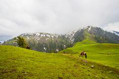 IMG_9506 (mimalkera) Tags: kaghanvalley naran kaghan shogran siripaye payemeadows lakesaifulmalook travelpakistan travelbeautifulpakistan travel wanderlust