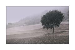 Dans la brume... (jldum) Tags: brouillard fog paysage lanscapesdreams lanscape arbre tree explore art artiste artistic labour hiver