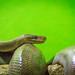 Reptile World