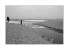 Cohabiter ... (Panafloma) Tags: portugal algarve albufeira océan plage sable oiseaux personnes bw monochrome noiretblanc vacances loisirs