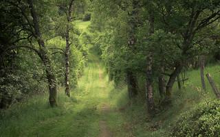 Eifel Path