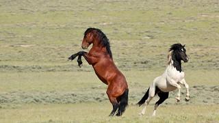 Stallion Practice