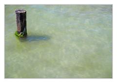 Coastal protection (bavare51) Tags: buhne küstenschutz algen wasser water balticsea green