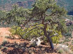 P3140167.jpg (Alan Gore) Tags: hiking westerners arizona steamboatrock nature
