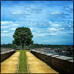 Tree of Life, Namur (Dirk Desmet) Tags: treeoflife namur namen citadel citadelle