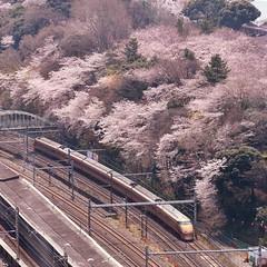 (mirei24) Tags: sakura 桜 サクラ 日本 japan 東京 tokyo 電車 cherryblossom train sakuratree 展望台 北とぴあ japon railway 일본 도쿄 东京 鉄道 鉄道風景 railroad 鉄道写真 春