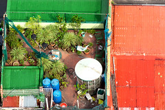 Roof Garden _0285 (hkoons) Tags: maritimesoutheastasia southeastasia capital luzon manila philippines bloom blooming blossom color flower flowers garden island islands leaf leaves peddles plants pots stems tropical tropics