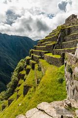 Machu Picchu -_DSC0638