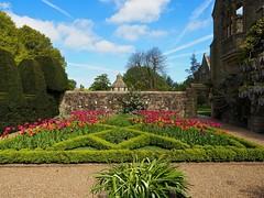 P5102498 (simonrwilkinson) Tags: nymans nationaltrust haywardsheath westsussex handcross gardenplant garden tulips