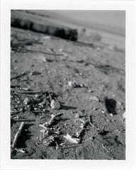 Salton City, CA (moominsean) Tags: polaroid 190 instant fuji fp100b california saltoncity saltonsea desert brine bones heat
