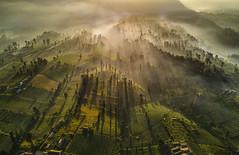 s 2017 May21_Bromo_DJI_0088 (Andrew JK Tan) Tags: 2017 bromo indonesia aerial dji mavic mist tengger