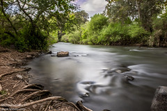 WHERE THE RIVER FLOWS (Michael Leshets) Tags: trees israel water river travel clouds tree rocks green long exposure stream roots roo galilee snir