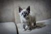 Fofura| (anavaz.) Tags: flickrbrasil flickrestrellas bemflickr cat gato bichano amor love cute photo photographer catslover flickrfriday bebe