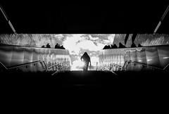 Into the Sun (Reiner Girsch) Tags: olympus omd em5 streetart street streetphotoraphy streetfotografie people life lifeofthestreet cologne humans köln menschen leute gesichter strase strasenfotografie rgfotografie city citydschungel grosstadtdschungel stadt blackandwhite blackwhite sw schwarzweis magazin streetmagazin issuu soulofstreetcom com passion leidenschaft sos soulofstreet silhouette light herzblut soulofcologne monochrome picoftheday pictureoftheday pothd followme streetphotographer lifeonthestreet reallife face faces bw hamburg hh ueberseequartier überseequartier hafencity