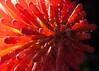 2017-02-05 005.jpg (Esteban Volentini) Tags: flores lugares motivo naturaleza ocaciones provincia tafidelvalle tucuman tucumán vacaciones yerbabuena argentina ar