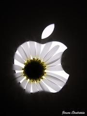 Anagrama ordenador (josuneetxebarriaesparta) Tags: manzana sagarra apple mac margarita daisy computer ordenador ordenagailua